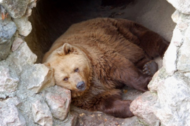bear-pictures-11-622x415